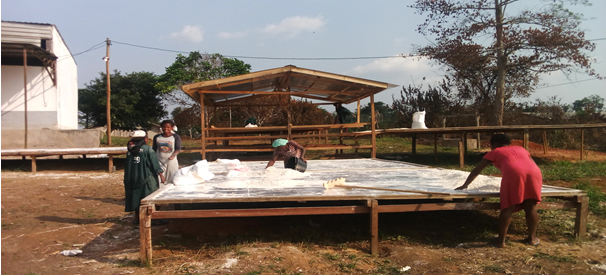 Cassava solar drying will be implemented in the Ngoulemakong council site to replace grid-connected drying processes and to reduce the processing operations costs for farmers.